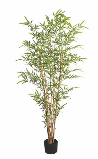 Bambu 200cm